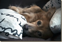 Собаки Оксаны
