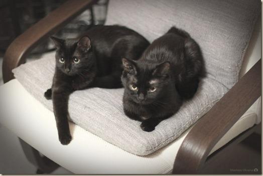 Кошки Оксаны