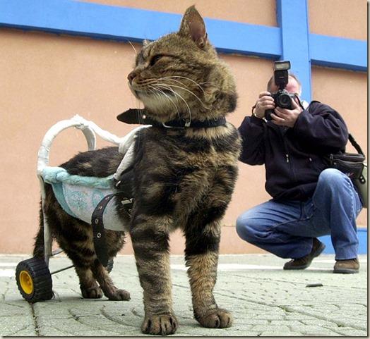 Кошка Сиси