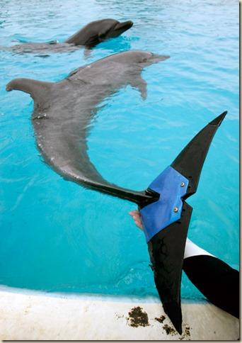 Дельфин Фуджи
