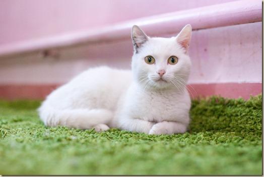 Кошка Сметанка