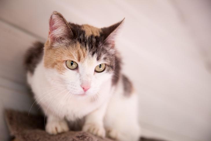 Кошка Стелла