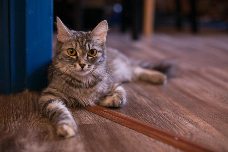 Кошка Любица