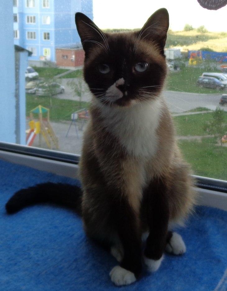 Кошка Алиса