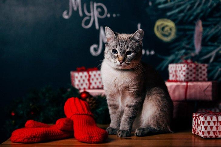 cat_asiya_07