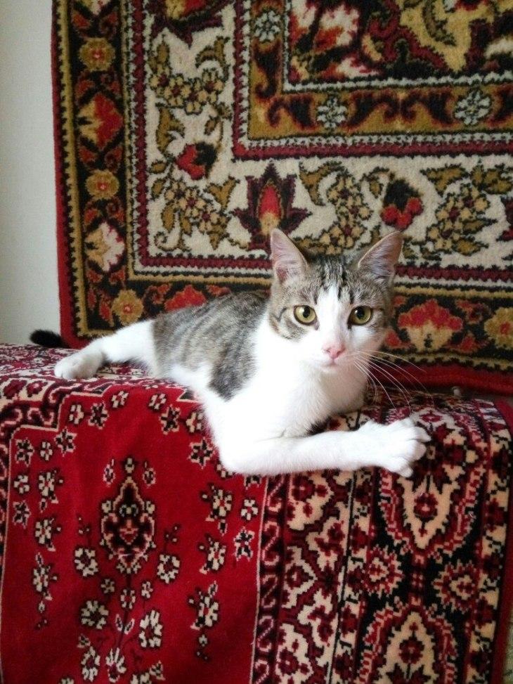 cat_fantik_02