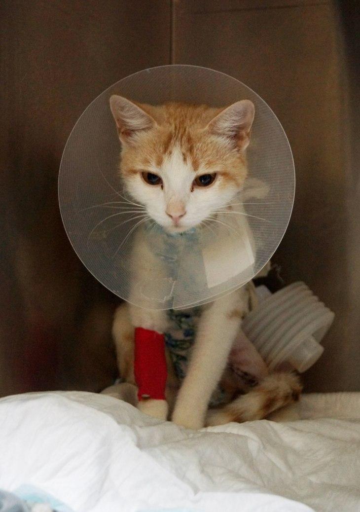 Хронология спасения кошки Лилу