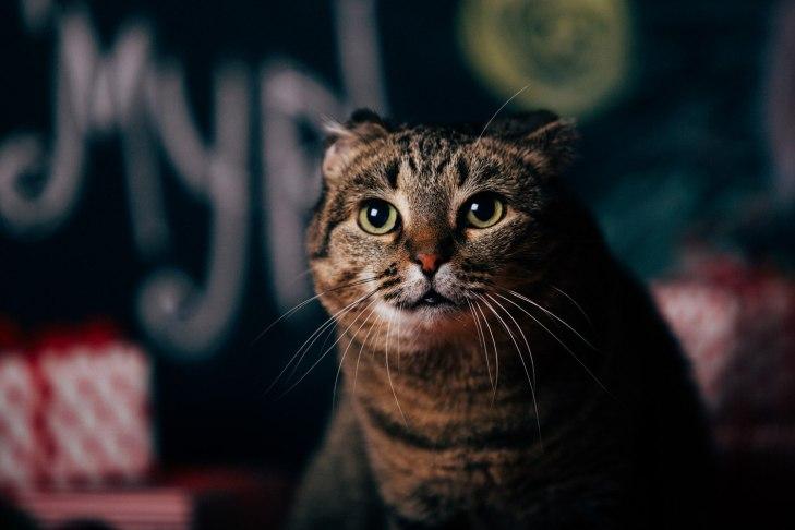 cat_shabadinova_08