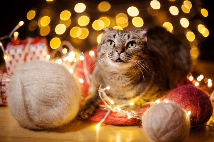 Кошка Шабадинова ищет дом