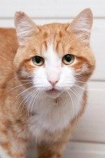 cat_timon_02