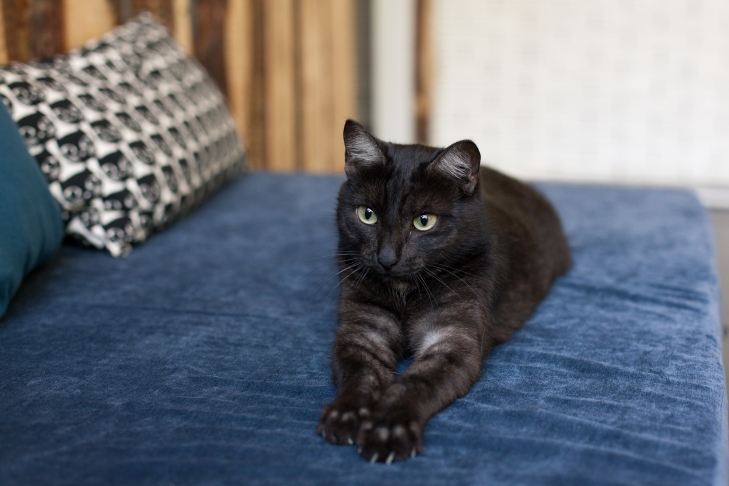 кошка Лейла