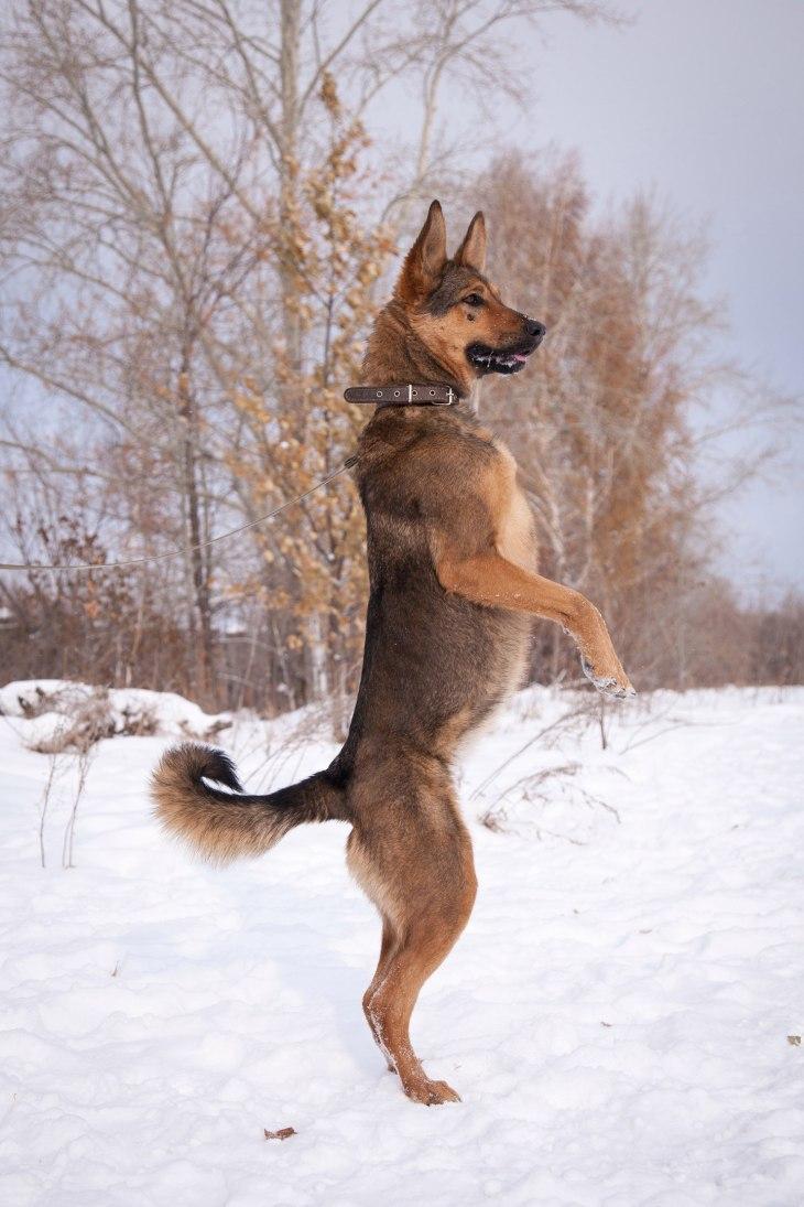 dog_frisbee_06