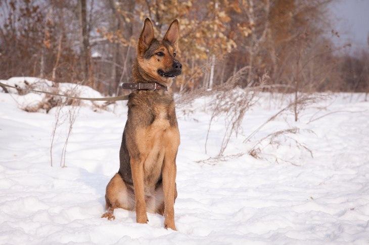 Собака Фрисби