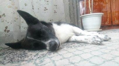 dog_lana_03