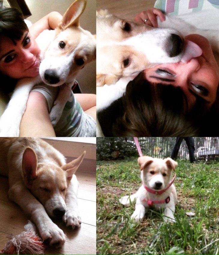 puppy_basiya_01