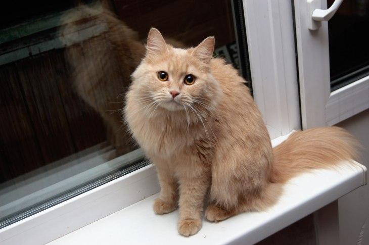 Кошка Плюша