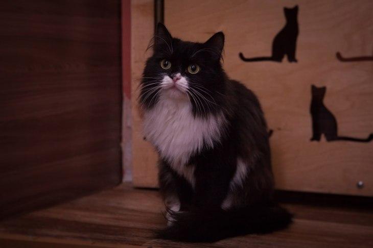 Кошка Марго