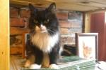 cat_margo_02