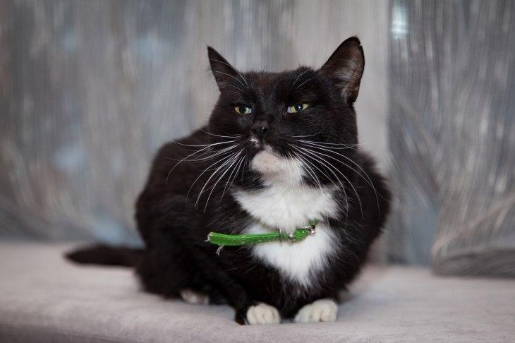 Кошка Пося