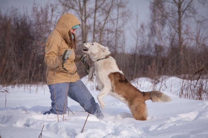 Собака Лавина