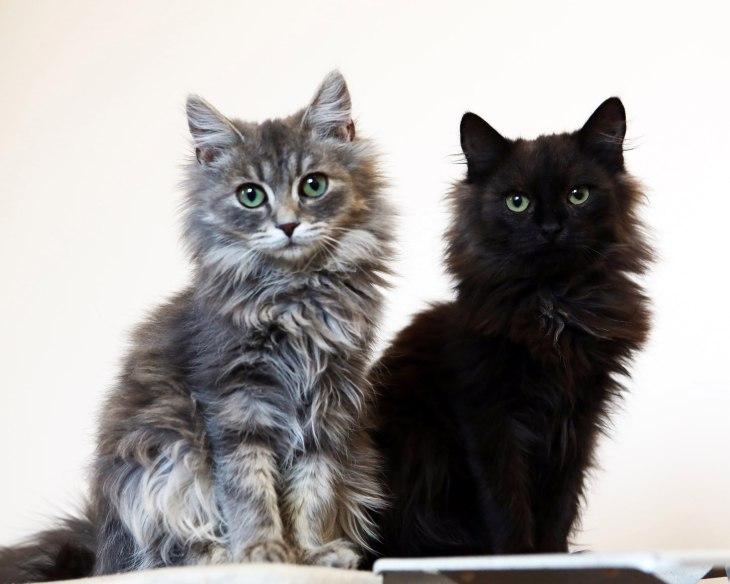 Котята Антошка и Тимошка