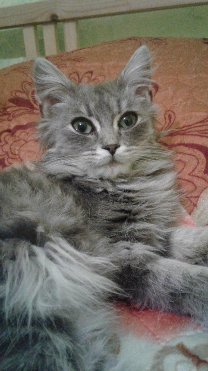 Котёнок Тимошка