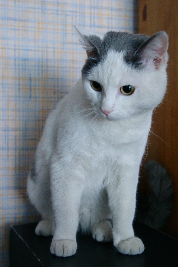 cat_badvis_02