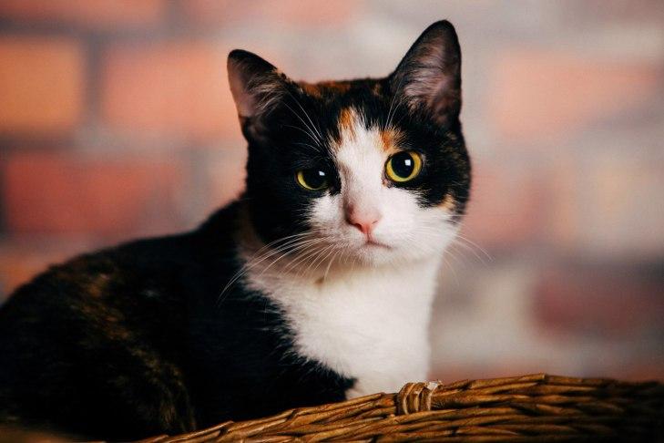 cat_krista_01