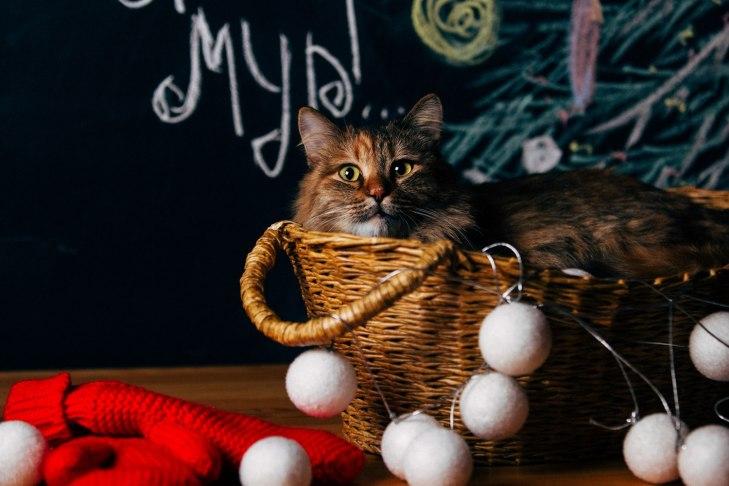 cat_smuzi_01