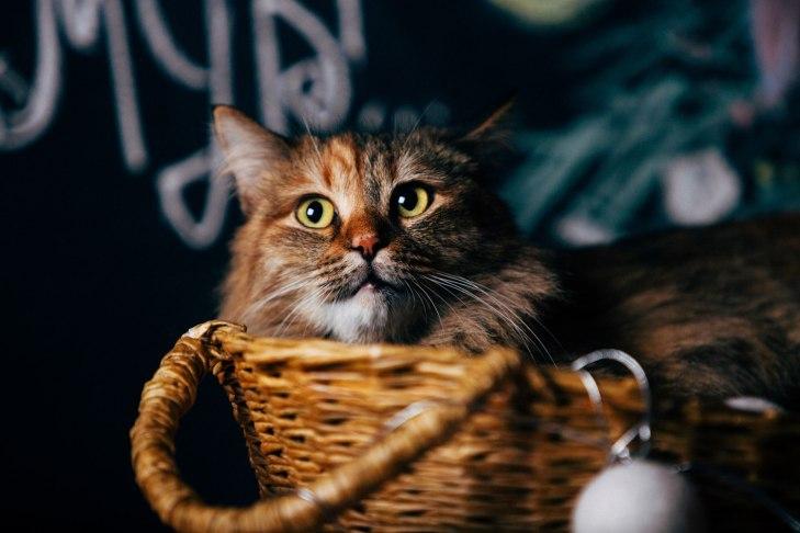 cat_smuzi_03