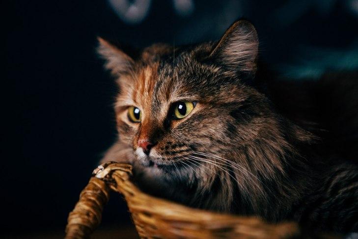 cat_smuzi_04