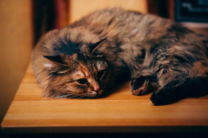 cat_smuzi_05