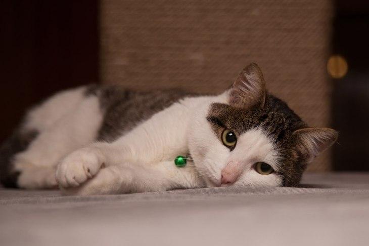cat_timoha_01