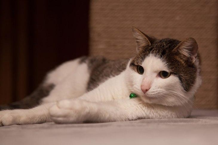cat_timoha_02