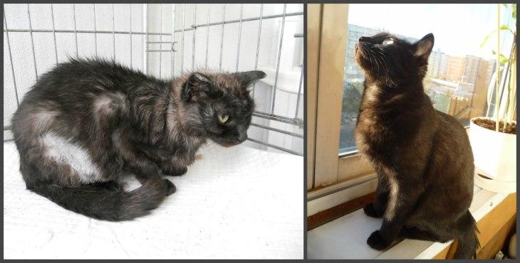 Кошка Дамка. До и после