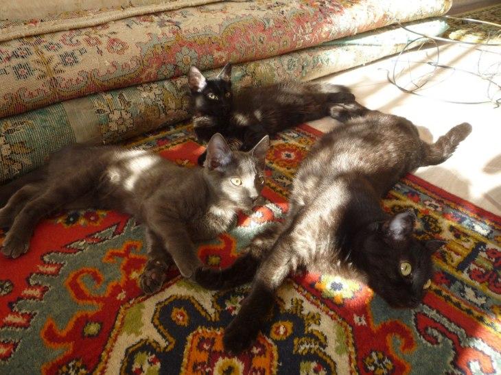 Кошка Дымка и её котята