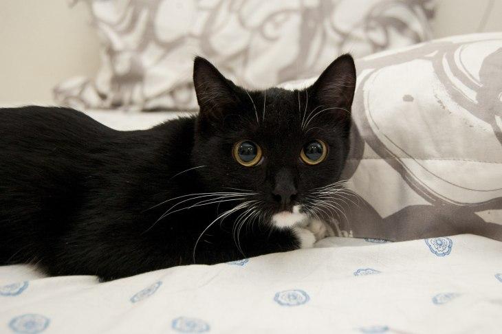 Кошка Малышка