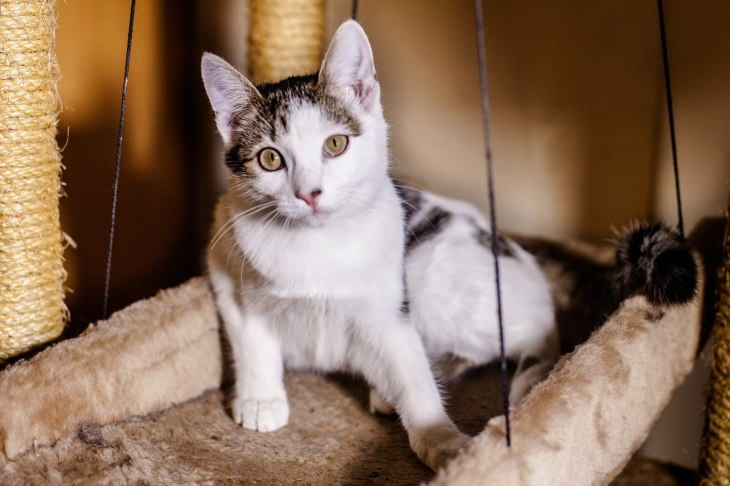 kitty_snezhinka_01