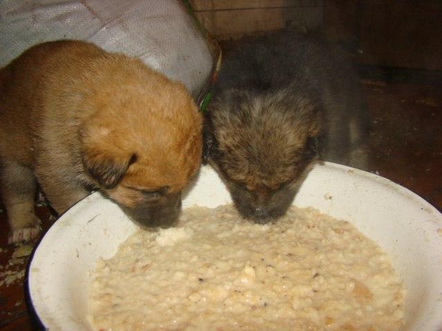 puppies_need_help_01