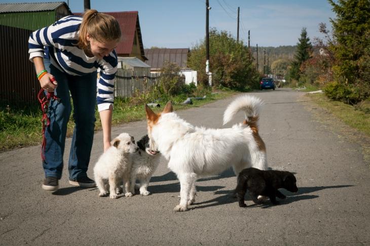 Кошкин дом. Как волонтеры открыли котокафе и зарегистрировали благотворительный фонд