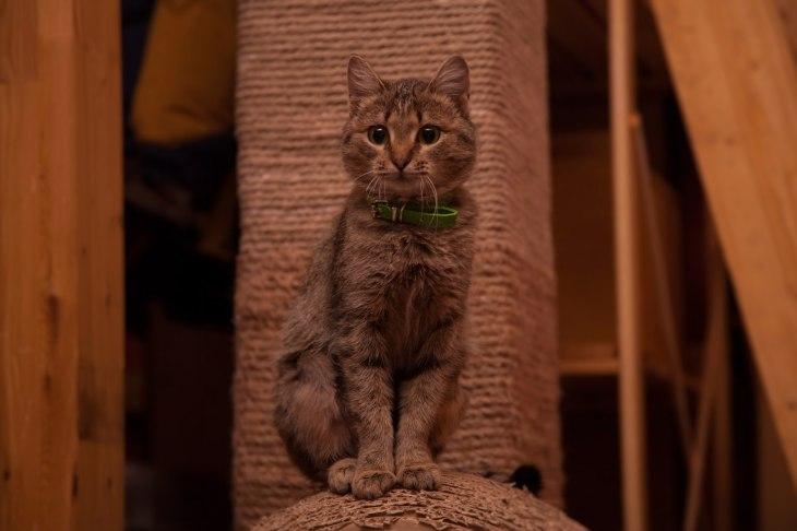 cat_gretta_06