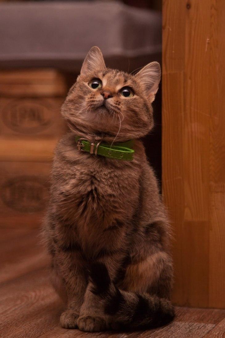 cat_gretta_08