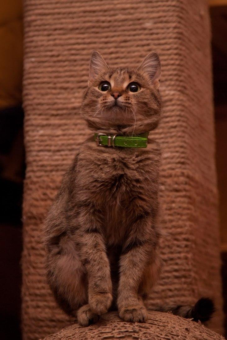 cat_gretta_09