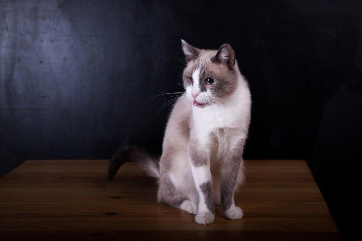 cat_pudra_07