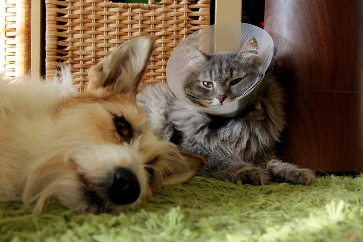 Кот Василий, он же Джон Сноу