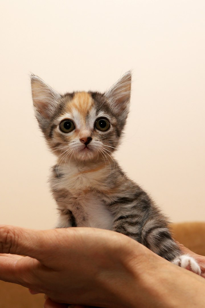 Помощь кошачьей семье
