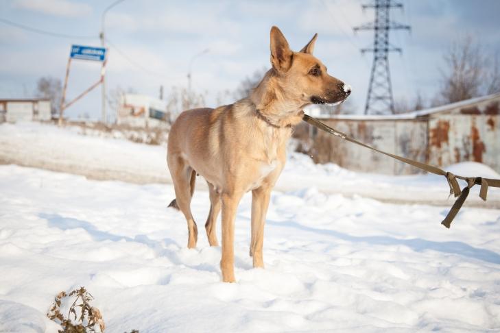 собака Линда