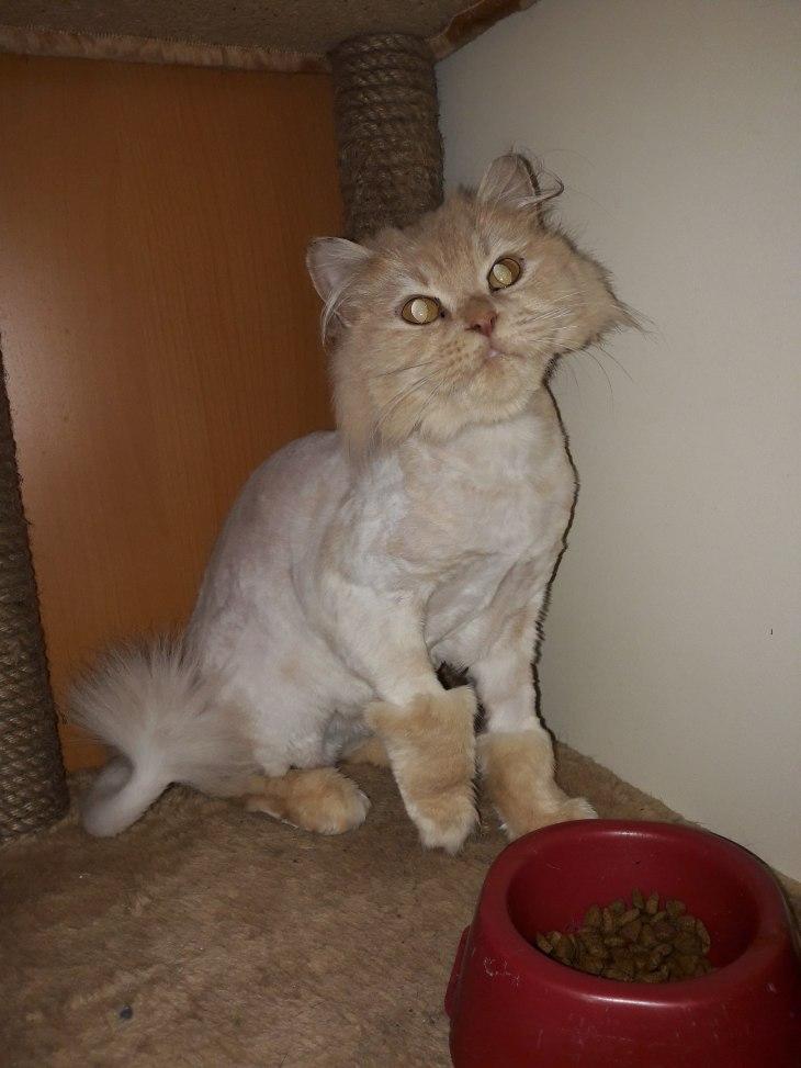 кошка Карамель