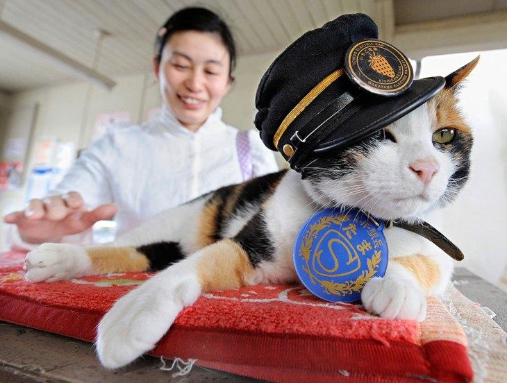 Кошка Тама. Станционный смотритель
