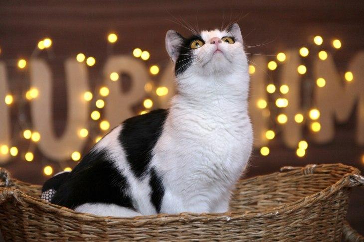 кошка Джина